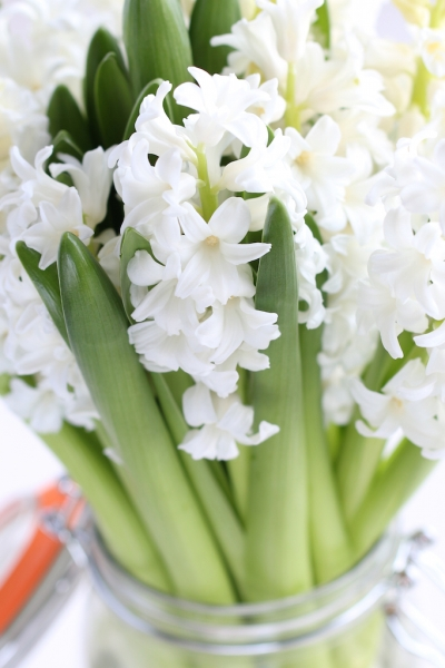 Dillicious Spring Salad - Hyacinth